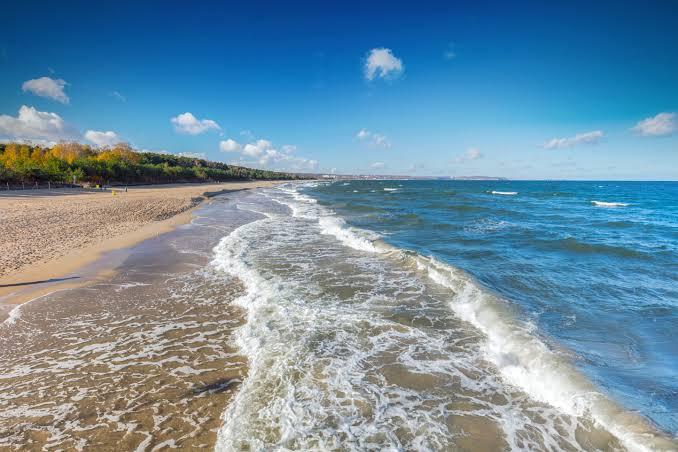 الطحالب البحرية تضرب شواطئ اسبانيا