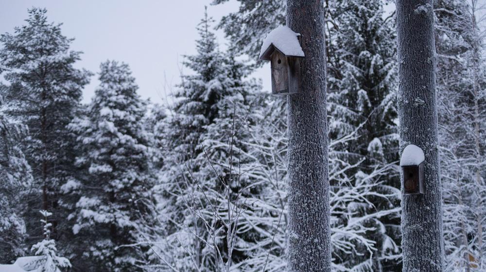 بيت الشجرة تجربة فريدة من نوعها في لابلاند السويد