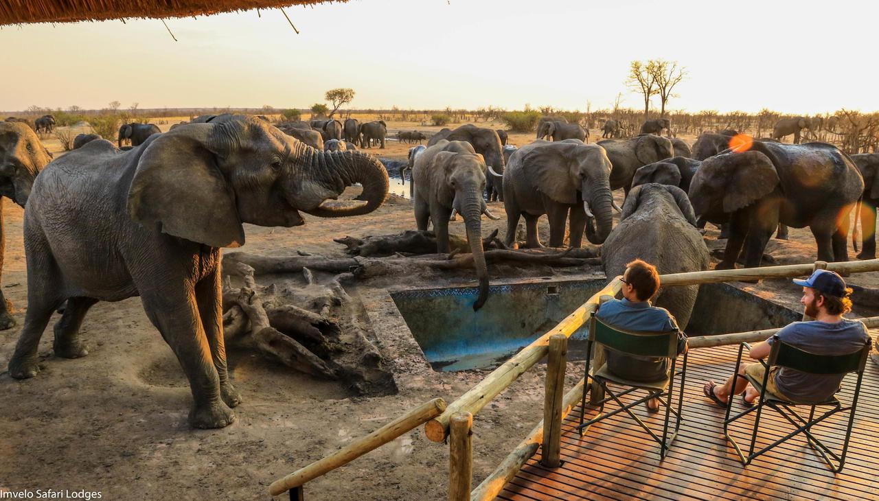 سفاري لودج مشاركة حمام سباحة مع الفيلة