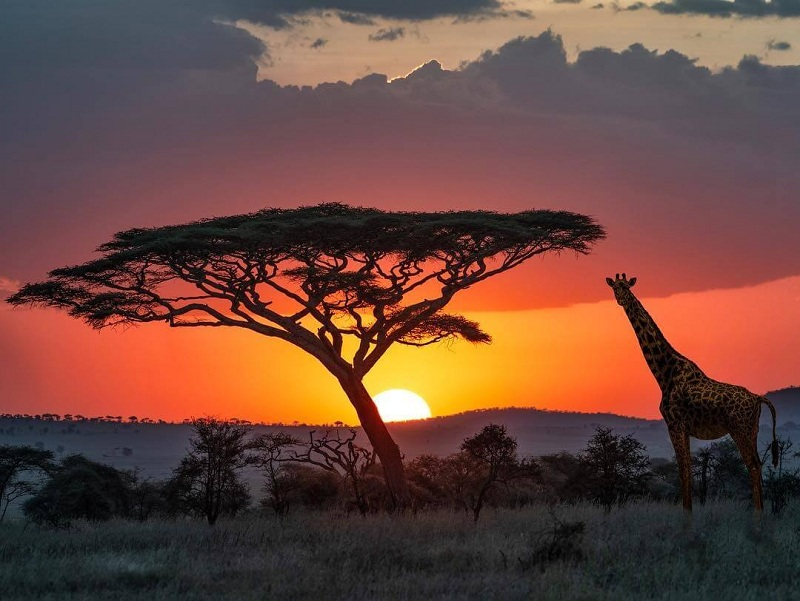 ألمانيا تقدم الدعم المالي للحفاظ على الحياة البرية في تنزانيا