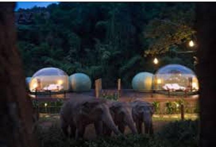 الأفيال خارج الغرفة في منتج أنانتارا جولدن تراينجل إليفانت