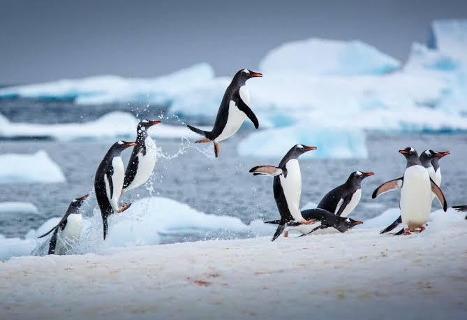 السياحة في القطب الجنوبي.. والاستحمام مع البطريق