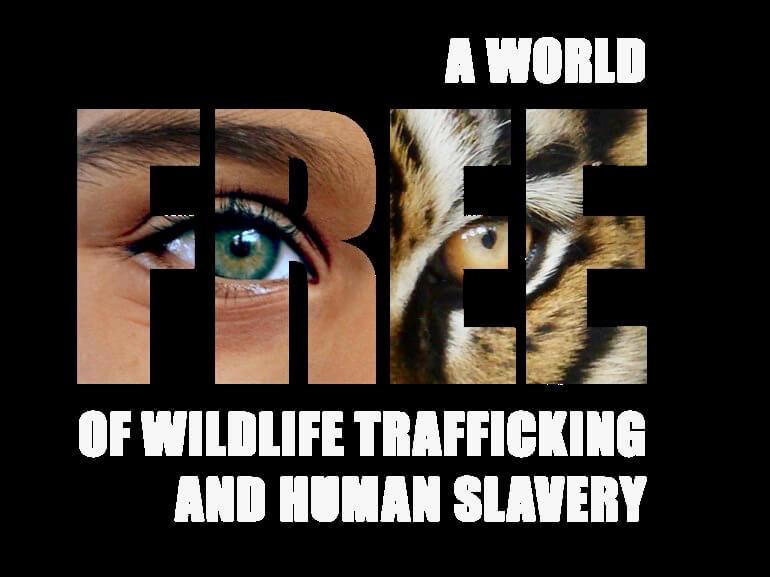 الحكومة الصينية تفرض حظر على تجارة الحياة البرية في الصين