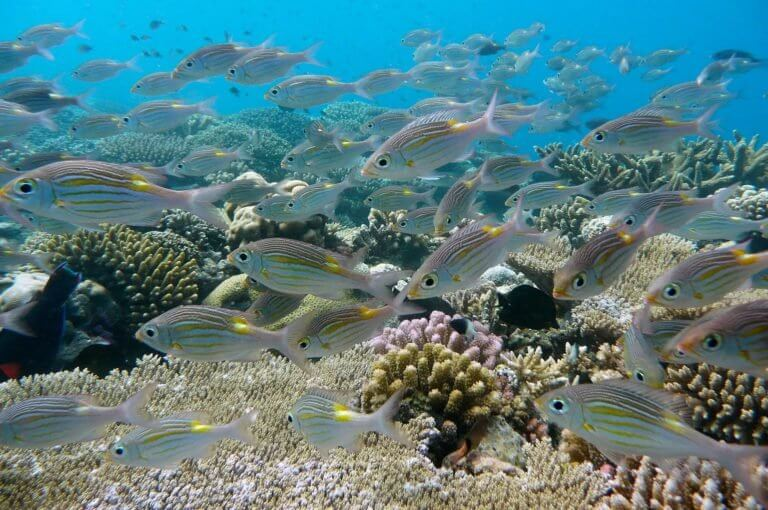 تحديات تواجه جزيرة الفانيليا وهي تبدأ سياحة عام 2020