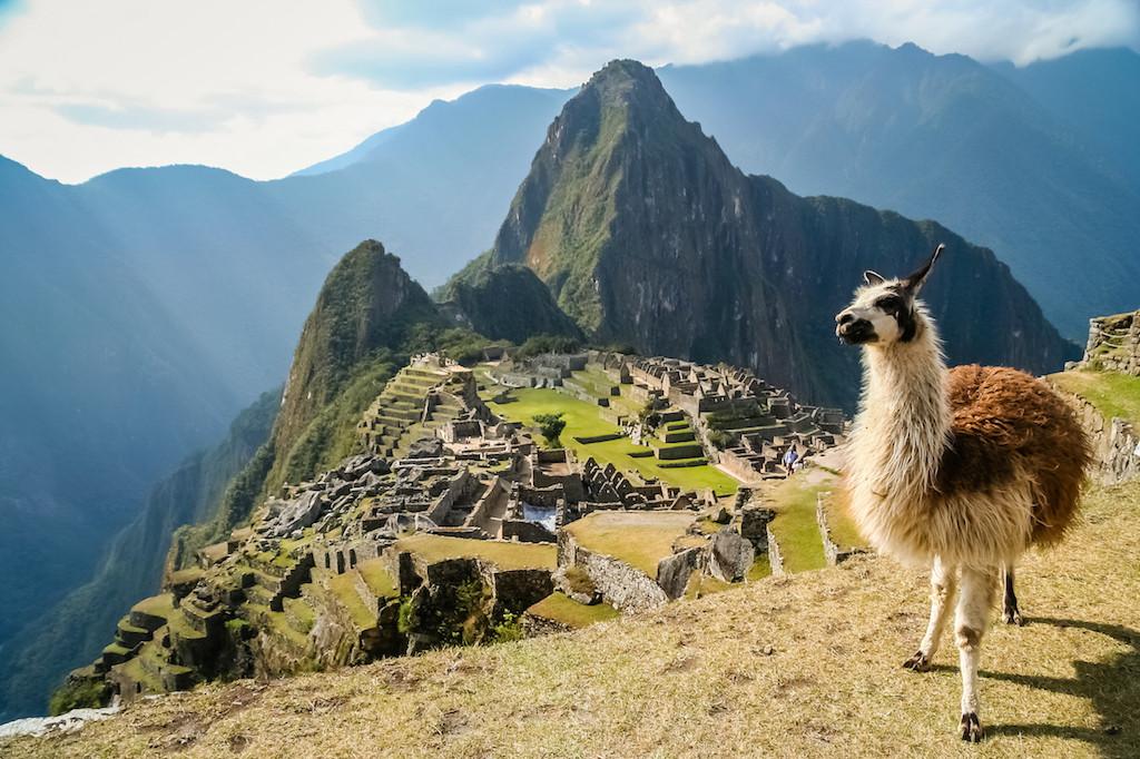 حملة في بيرو لزرع مليون شجرة حول موقع ماتشو بيتشو