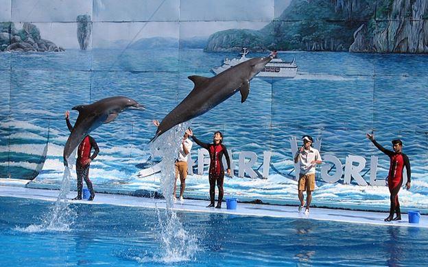 تذاكر دلفونيريوم لعرض الدلافين ( تذاكر VIP )