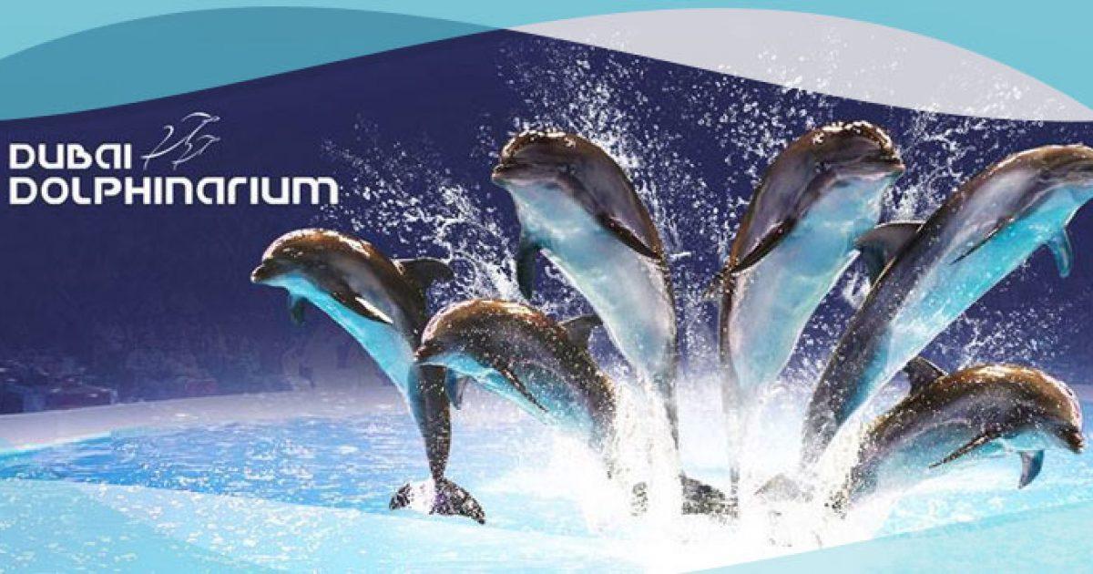 تذاكر دلفونيريوم عرض الدلافين ( تذاكر VIP )